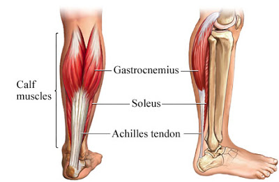 achilles tendon.jpg